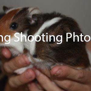 two baby guinea pig's